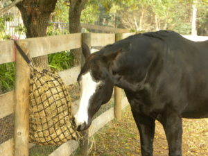 Nets tied to a fence work better for horses wearing shoes, and simulate natural browsing.