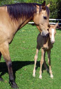 The bond between a mare and foal is essential to survival.