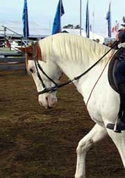Over flexion can be a problem with sensitive horses so check that the reins are providing enough release, and that you are being light with rein contact.