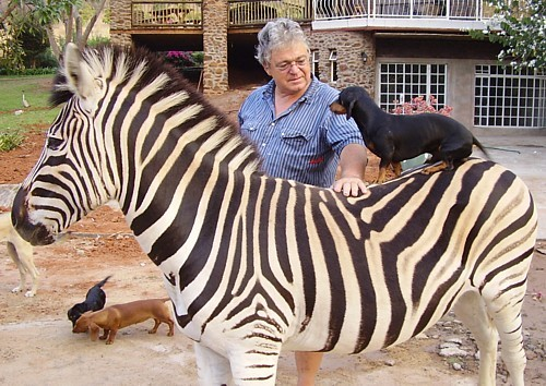 Zebra Training - Natural Horse World