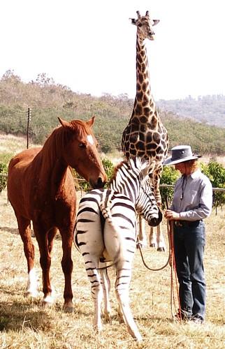 Giraffe,Ros&Gilbert