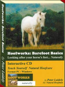 A comprehensive and interactive text book on CD.