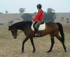 Riding Bitless – 'On the Bridle' - Natural Horse World