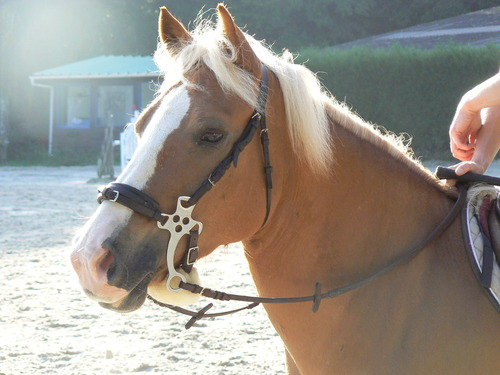 Bitless Bridles - What's the Difference? - Natural Horse World