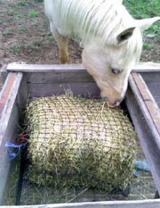 Slowfeeder hay nets have made life so much better for horses.