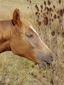 Check that weeds your have are safe for your horses to eat.