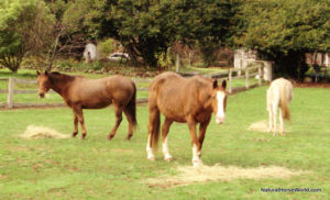 Horses warm up quickly when fed loose hay.