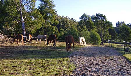 Horsesontrack1