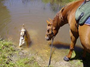 Jack & Tigga in dam