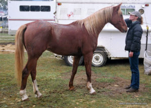Jen And Zamir At The Tom Quilty Endurance Ride Only Use A Rug Night After