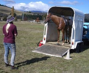 Gradual shaping can help a horse learn complex tasks like backing into a trailer at liberty.
