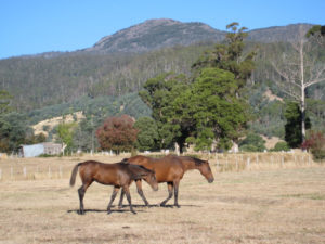 Mares and foals especially need to be supplemented with good feed and minerals during a drought.