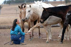 Michelle Dennis of Firehorse Inspirations practices good horsemanship.