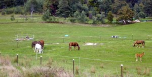 A mare and foal graze in the centre while the rest of the herd are on the track.