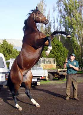 Spare a thought for the average racehorse - Natural Horse World