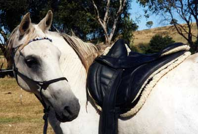 Treeless Saddles - What to look for - Natural Horse World