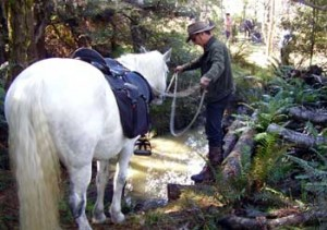 Take the time to develop your horse's water crossing confidence.