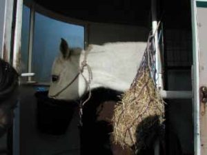 Feeding your horse on the trailer/float helps establish it as a comfort zone.