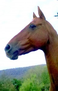 The fearful horse benefits most from the CAT-H approach.