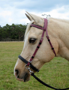 Stripped down to the bare essentials - the LightRider Bitless Noseband can be used without the chinstrap or connector strap.