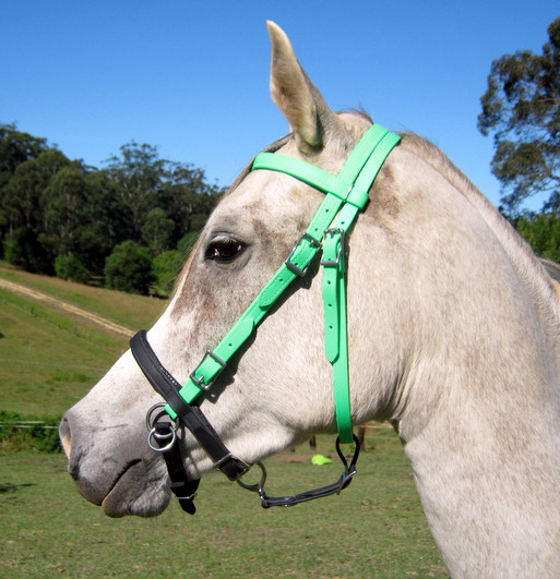 The bitless noseband with chinstrap and connector strap (going back to the throatlatch) to assist with leading or lungeing.