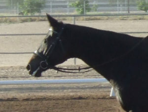 Just for comparison, here is a photo of my mare Belle in a regular snaffle bit last year, looking quite foamy.
