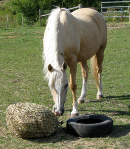 Tying the net to a tyre keeps it from being dragged into manure, getting lost, and for ease of eating when the hay gets low.