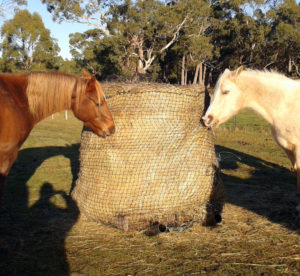 Horses happily eating from the round bale with a Haysaver Net.