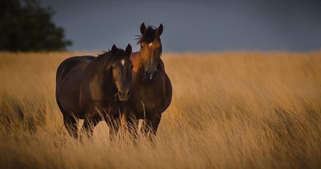 Heal;thy Horses Land Expo