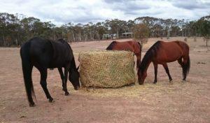 Oaten hay is best fed from 6cm round bale hay nets.