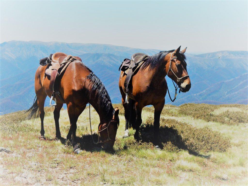 LightRider Natural Trail Horses