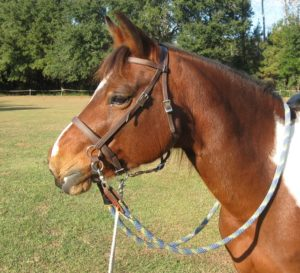 LightRider Bitless Bridle Wry Nose