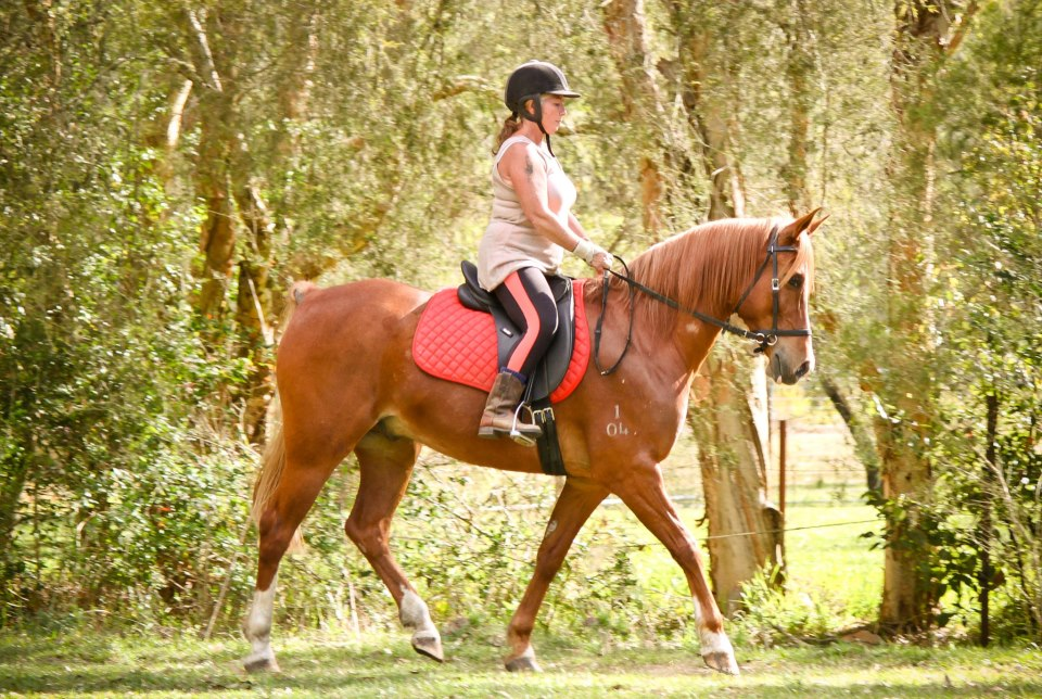 LightRider Dressage Deb