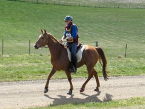 Do You Know When to try a Bitless Bridle? - Natural Horse World
