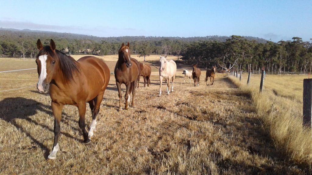 My herd following me.