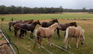 Girls Herd Shelter from rain