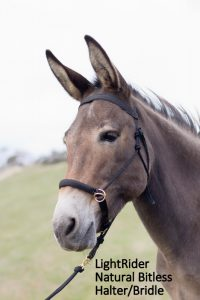 LightRider Natural bridle on Sassy the mule