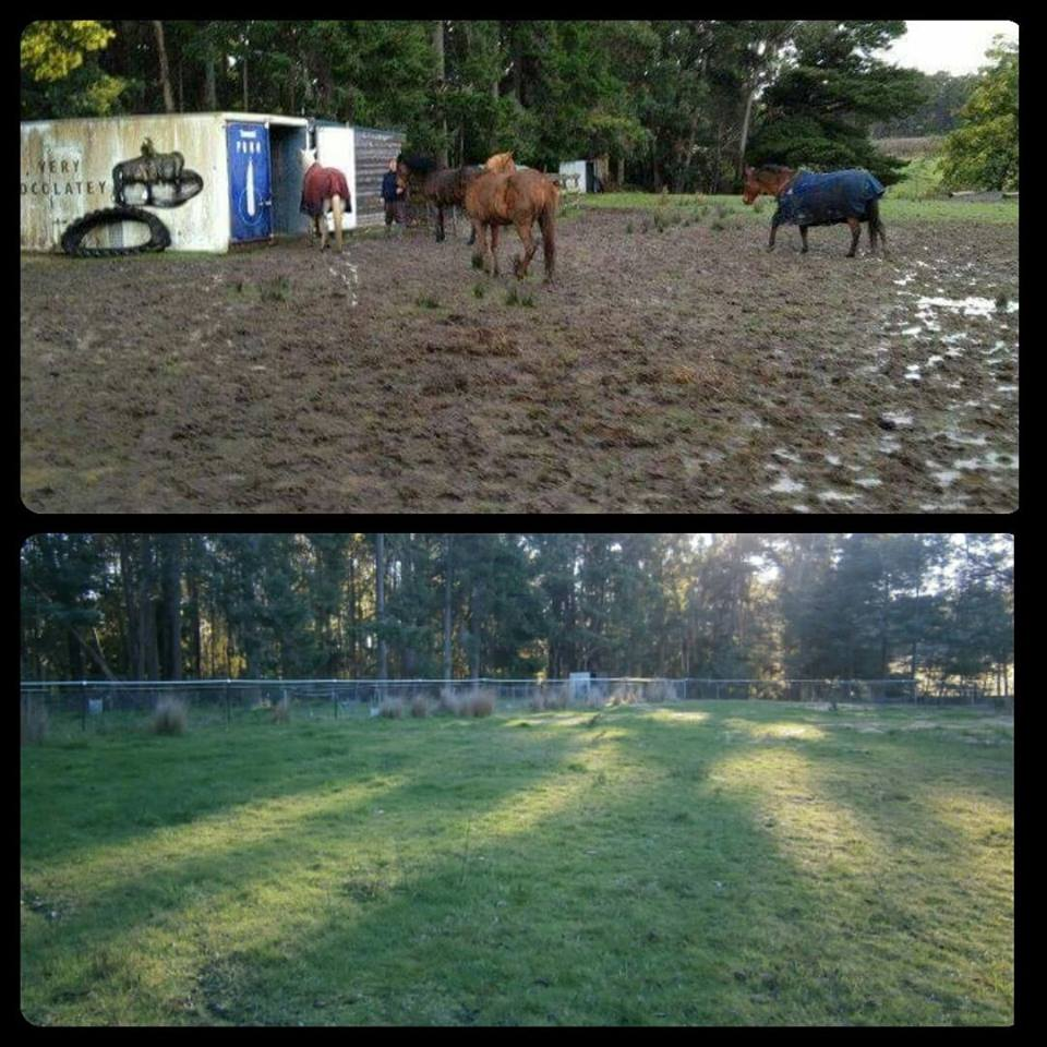 LaurelG Equicentral Paddock before and after